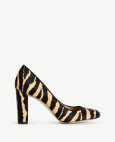 Ann Taylor Drea Zebra Print Haircalf Pumps