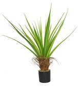 Laura Ashley 44 Inch Agave Plant with Cocoa Skin