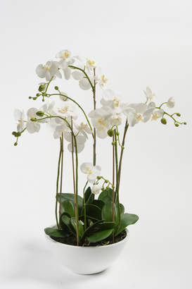 Pad Lifestyle - White Silk Orchids In Bowl - Multi - White/Green