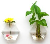 AWEVILIA Wall Hanging Plants Planter Terrariums Creative Fashion Glass Hexagon Shape Vase Home Decor Wall Plants