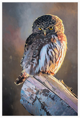 Jonathan Bass Studio Northern Pygmy Owl, Decorative Framed Hand Embelli
