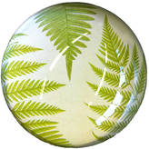 Natural History - The Origin of Style Fern Paperweight