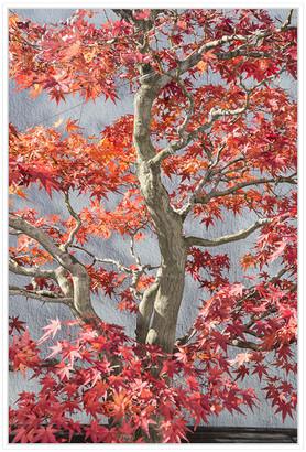 Jonathan Bass Studio Red Bonsai Tree National Arboretum , Decorative Fr