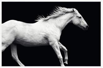 Pottery Barn White Horse On Black Framed Paper Print by Jennifer Meyers