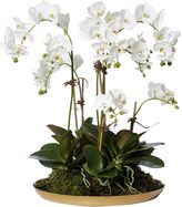 Rogue Artificial Phalaenopsis Orchid Garden with Element Platter