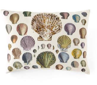 John Derian Captain Thomas Brown Shells Oyster Pillow