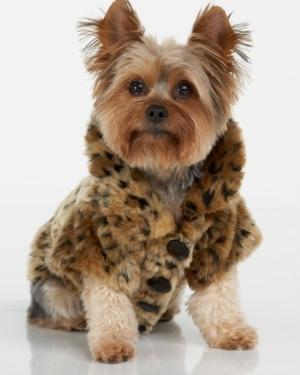 Juicy Couture Leopard-Print Dog Coat