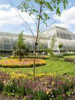 Virgin Experience Days Visit To Kew Gardens And Palace With Afternoon Tea For Two