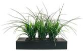 Laura Ashley Home Grass in Rectangular Planter I