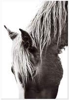 "Drew Doggett Photography Whisper image size - 38""L x 57""W; paper size - 44""L x 63""W Art"