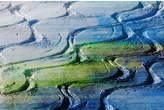 Parvez Taj Fresh Tracks Canvas Wall Art