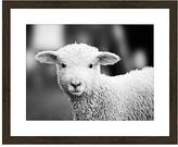 PTM Images Black & White Lamb Framed Print