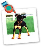 Mini A Ture 3dRose LLC qs_592_1 Dogs Miniature Pinscher - Pinscher Puppy - Quilt Squares