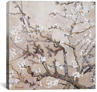 iCanvas Almond Branches In Bloom San Remy, C. Canvas Wall Art