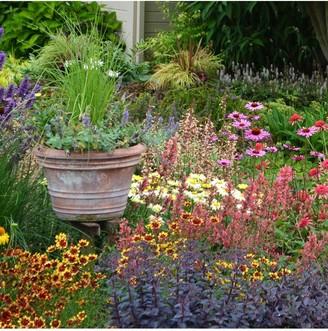 Lucky Dip Perennial 12 Plant Collection