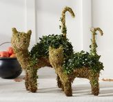 Pottery Barn Live Cat Topiary