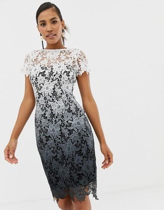 Paper Dolls ombre metallic lace pencil dress in multi