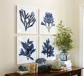Pottery Barn Framed Coral Prints - Indigo