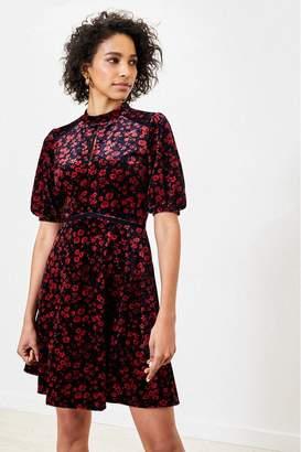 Oasis Womens Black Ditsy Floral Velvet Dress - Black
