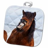 3dRose Danita Delimont - Horses - Icelandic Horse during winter with a typical winter coat, Iceland. - 8x8 Potholder (phl_210292_1)