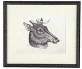 Mighty Beast Animal Wall Art in a Black Frame - Stag - New!