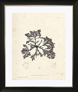 Photo Frames And Art Marine Botanicals II Framed Art Picture/Print In A Black Frame - Glass Front - Outside Measurements 51 x 43cm