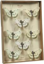 HomArt Butterfly Specimen Box