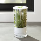 Crate & Barrel Glass Herb Keeper