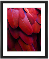 PTM Images Red Feathers Framed Giclee Art - 22x18