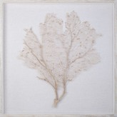 The Well Appointed House Natural Coral Sea Fan Wall Art with a Distressed White Frame