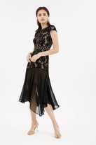 Coast Lace Stretch Cap Sleeve Dress