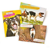 GARTNER STUDIOS Gartner Greetings Pet Humor Greeting Cards, 3 pack, Thinking Of You