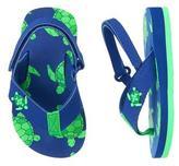 Gymboree Turtle Flip Flops