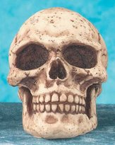 Summit Skull Shift Knob - Collectible Figurine Statue Sculpture Figure Model