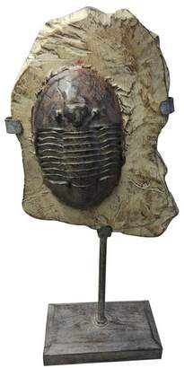 Fossil Moe's Home Trilobite On Stand