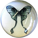 Natural History - The Origin of Style Winter's Moth Paperweight