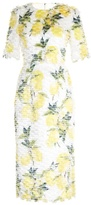 Dolce & Gabbana Lemon-print fil coupé dress