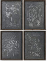 Uttermost Root Study 4-Pc. Print Wall Art