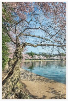 Jonathan Bass Studio Cherry Blossoms 6, Decorative Framed Hand Embellis