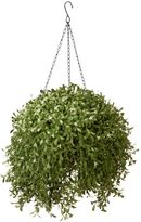 Bed Bath & Beyond National Tree 18-Inch Argentea Hanging Basket