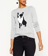 Daniel Cremieux Gayle Knit Frenchie Bulldog Sweater