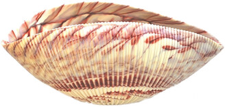 Murano Glass Shell Bowl