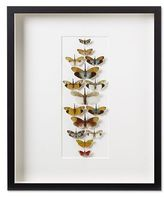 Form & Pheromone, Lanternfly Formation