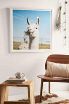 Urban Outfitters Ollie Alexander Baby Llama Drama Art Print