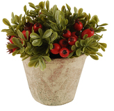 Red Berry Bush Succulent