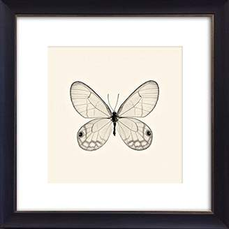 Photo Frames And Art Butterflies III Framed Art Picture/Print In A Black Frame - Glass Front - Outside Measurements 41 x 41cm