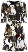 Dolce & Gabbana Appliquéd crêpe minidress