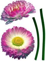 Freestyle 19 in. x 27 in. Daisy Wall Decal