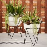 west elm Iris Planter + Chevron Stand