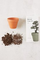Urban Outfitters Miniature Indoor Bonsai Tree